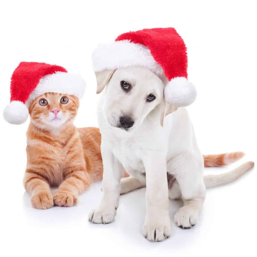 Cute Christmas pictures - Shutterturf