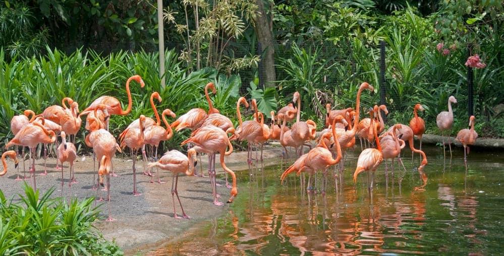 Jurong bird park, Singapore - Shutterturf