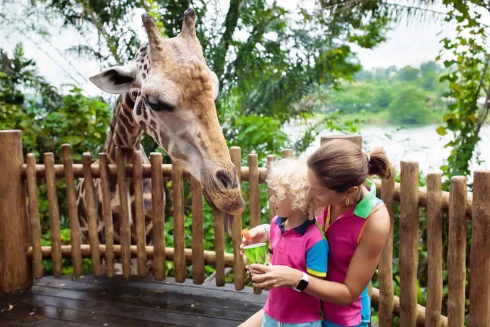 Singapore Zoo - Shutterturf