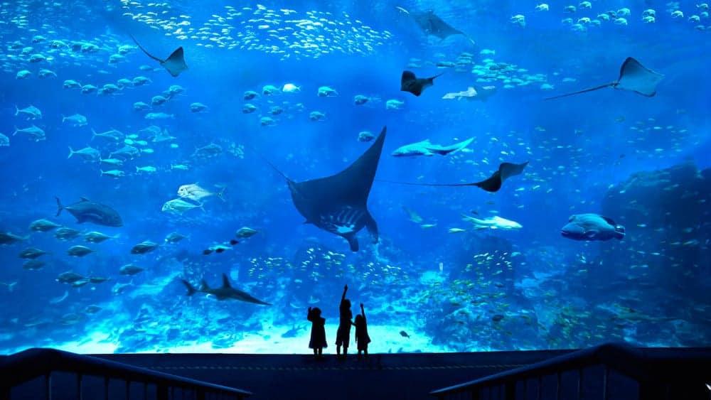 S.E.A. Aquarium, Sentosa, Singapore - Shutterturf