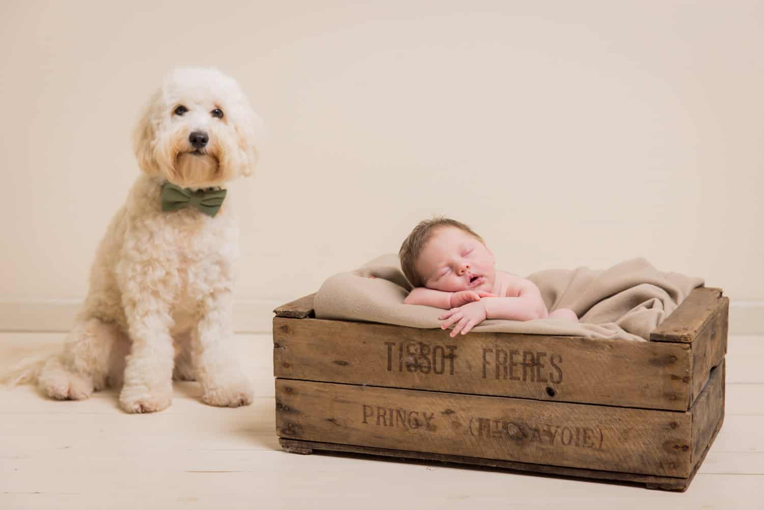 photoshoots for babies singapore baby is sleeping in a wooden box beside a white dog that's posing for the camera